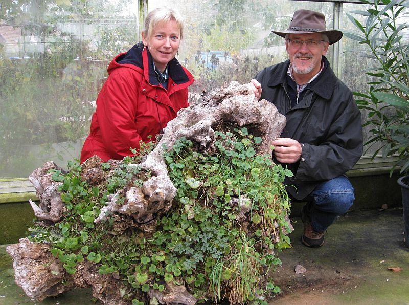 Oktober 2008 r hlemann 39 s blog for Wurzel deko garten