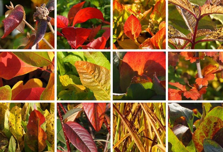 herbstfaerbung_collage